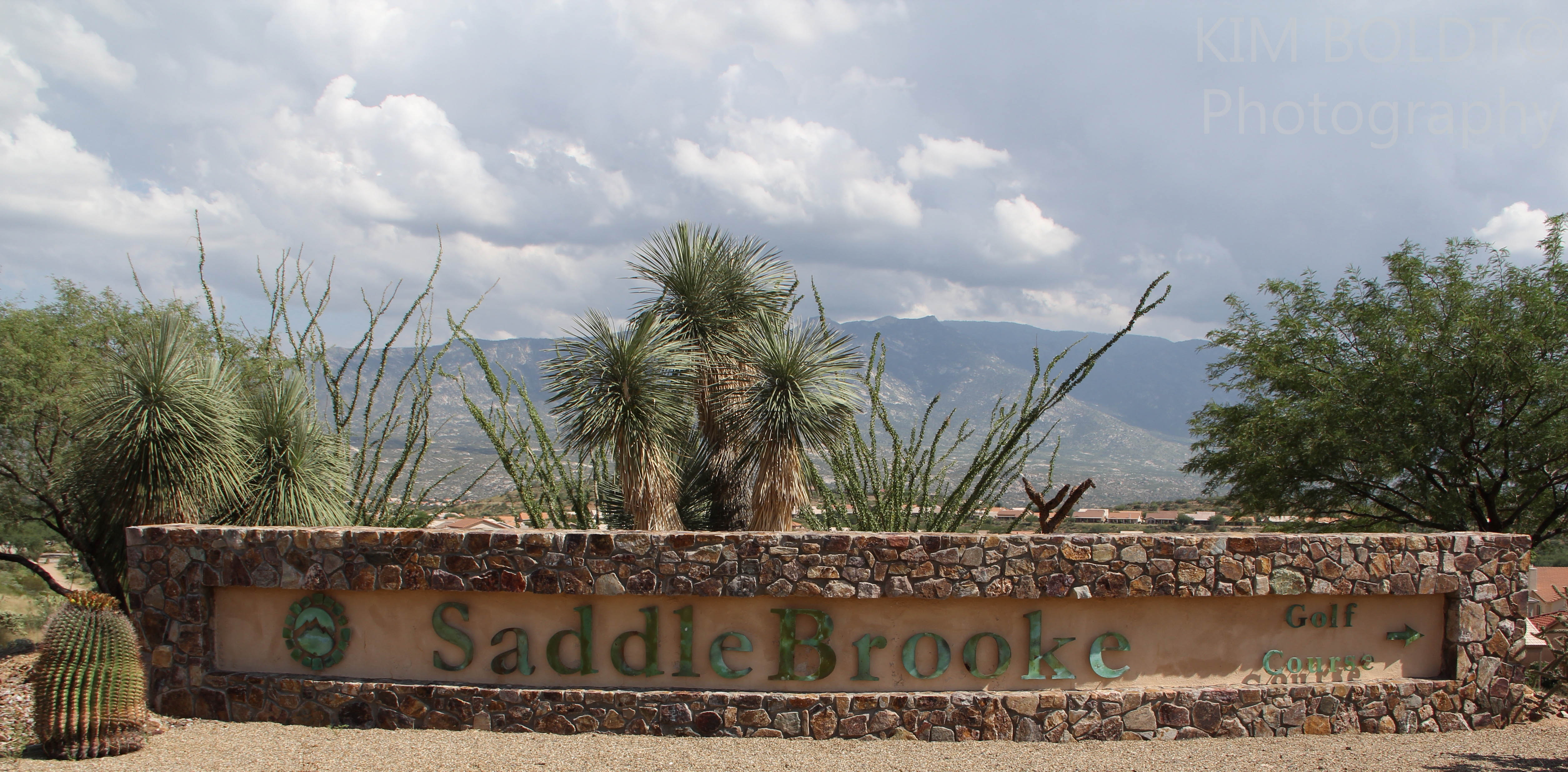 Saddlebrook is a robson community north of tucson for Saddelbrook