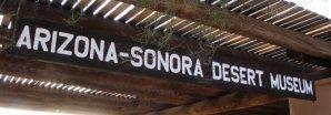 Sonora Desert Museum Tucson AZ