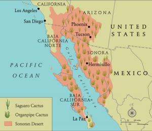 saguaro cactus map